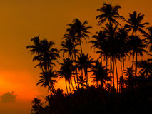 Beautiful tropical sunset Stock Photography