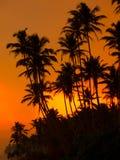 Beautiful tropical sunset Royalty Free Stock Image