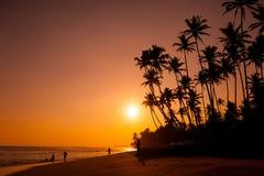 Beautiful tropical sunset Royalty Free Stock Photos