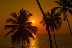 Beautiful tropical sunset Royalty Free Stock Images