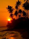 Beautiful tropical sunset Royalty Free Stock Photo
