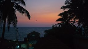 Beautiful Tropical Sunset by Indian Ocean. In a village Anjuna with a silhouettes of palm trees stock video footage