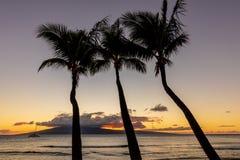 Beautiful Tropical Sunset on Maui. Palm trees silhouetted in a beautiful tropical sunset on the island of Maui Stock Image