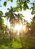 Beautiful tropical sunset with palm trees . Royalty Free Stock Photo