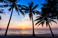 Beautiful tropical sunset with palm trees. Stock Photo