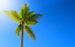 Beautiful tropical sunshine with palm tree and sun. Royalty Free Stock Photos