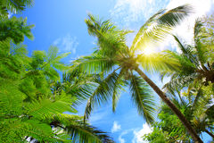 Beautiful tropical sunshine with palm tree and sun. Royalty Free Stock Photo