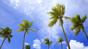Beautiful tropical sunshine with palm trees and sun. Palm trees and sun, tropical sunshine in the Caribbean Royalty Free Stock Image