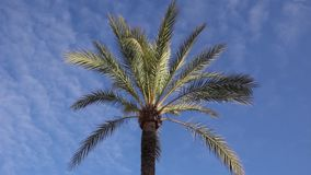 Beautiful tropical view landscape with palm tree againtst blue sky. And cloud background. tropical concept stock video