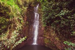 Waterfall on Hawaii. Beautiful tropical waterfall in Hawaii Royalty Free Stock Images