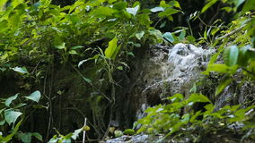 Beautiful tropical waterfall. Waterfall in the jungle.tropical rain forest with waterfall.Waterfall with natural swimming pool in a mountain river canyon stock video