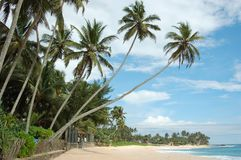 Beautiful tropical white beach with palms Royalty Free Stock Photo