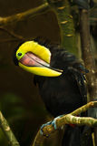 Beautiful tucan Stock Images
