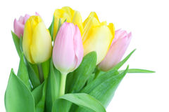 Beautiful tulip bouqet. Isolated on white background stock images