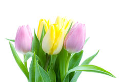 Beautiful tulip bouqet Stock Photo
