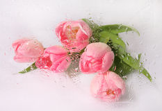 Beautiful tulip bouquet. With water drops royalty free stock images