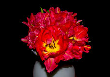 Beautiful tulip bouquet Royalty Free Stock Images