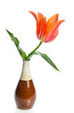 Beautiful tulip in a ceramic vase Stock Photos
