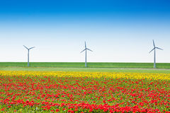 Beautiful tulip field with windmills and sky Royalty Free Stock Photo