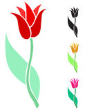 Beautiful tulip flower Stock Images