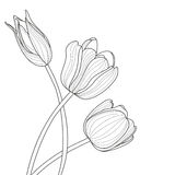 Beautiful tulip flowers line illustration. Vector abstract black and white floral background with place for text. Stock Photos