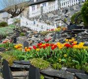 Beautiful tulip garden Stock Images