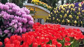 Tulip Gardens are the favourite travel and recreation destinations. The beautiful tulip garden is a perennial best destination for tourism and visitors around stock video