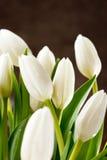 Beautiful tulips Stock Photo