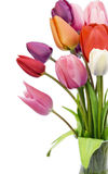 Beautiful tulips Stock Images