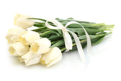 Beautiful tulips Stock Image