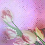 Beautiful tulips against polka dots. EPS 10 Royalty Free Stock Photography