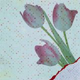 Beautiful tulips against polka dots. EPS 10 Stock Images