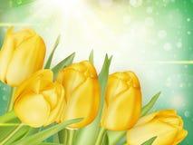 Beautiful tulips background. EPS 10 Royalty Free Stock Photography