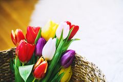 Tulips flowers in wicker straw basket royalty free stock photography