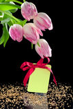 Beautiful tulips and a blank gift tag with bow Stock Image