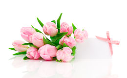 Beautiful tulips with with blank for text Royalty Free Stock Image
