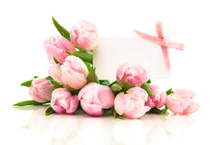 Beautiful tulips with with blank for text Stock Image
