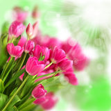 Beautiful tulips on a bokeh background Stock Photography