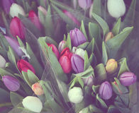 Beautiful tulips bouquet in vintage tones Royalty Free Stock Photography