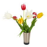 Beautiful tulips in bucket Royalty Free Stock Photos