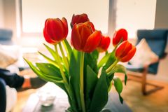 Beautiful tulips in bucket on table in room stock image