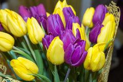 Beautiful tulips on Canadian Tulip Festival in Ottawa stock photography