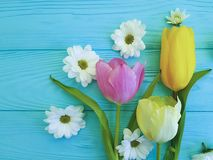 Beautiful tulips of chrysanthemum greeting mothers day , on a blue wooden background stock photos