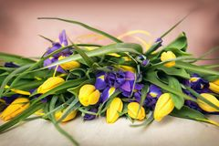 Beautiful tulips on color background Royalty Free Stock Photos