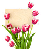 Beautiful Tulips and Empty Sign for message Royalty Free Stock Photos