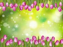 Beautiful tulips. EPS 10 Royalty Free Stock Image