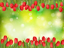 Beautiful tulips. EPS 10 Stock Photography