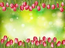 Beautiful tulips. EPS 10 Stock Photo