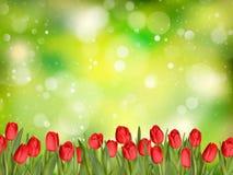 Beautiful tulips. EPS 10 Royalty Free Stock Photos