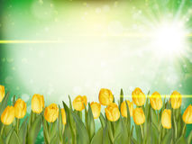 Beautiful tulips. EPS 10 Stock Images
